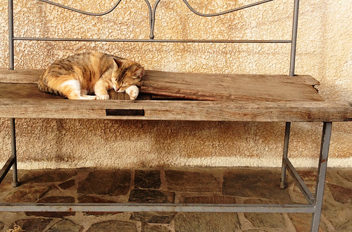 Sleeping stray cat