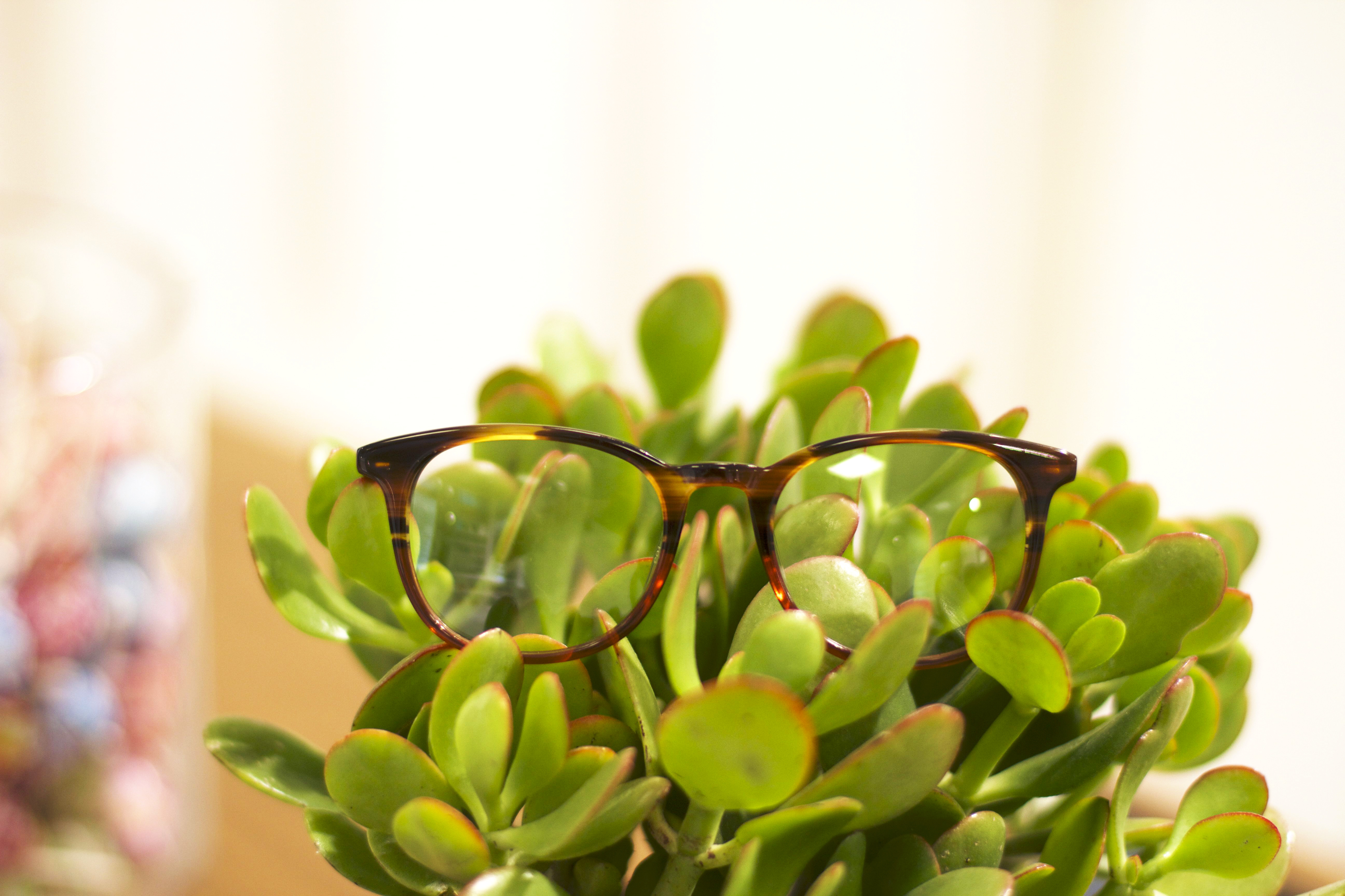 Warby4