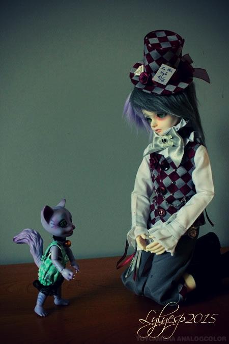 [ Shin - KDF Bory ] Cheshire chaton ? (23/12/2018) 21390477869_4c4d358cbb_o