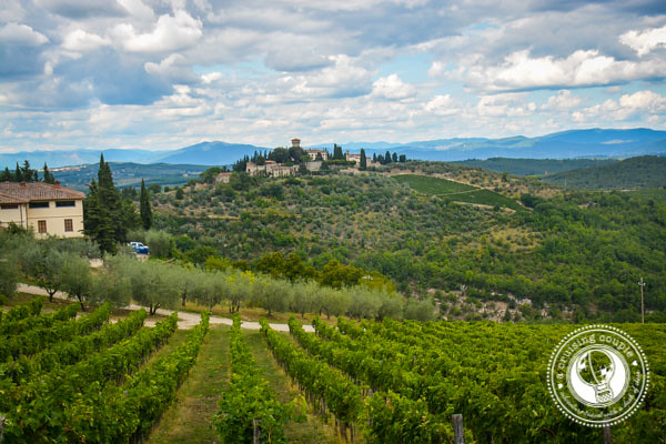 Vineyard in Chianti Region Tuscany