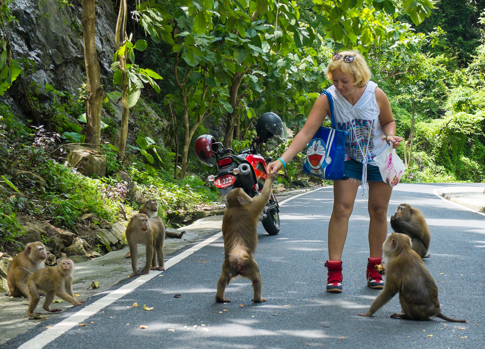 play with monkeys in phuket
