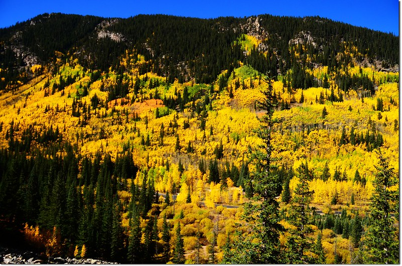 Fall colors at Guanella Pass, Colorado (17)