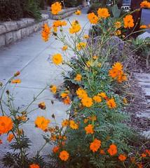🌸 #santabarbara #flowers