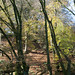 Autumn on Lewesdon Hill-4