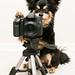 PhoDogRapher by Pawsome33