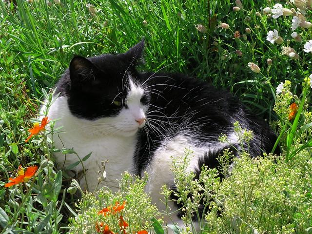 Funny Jungle Cat