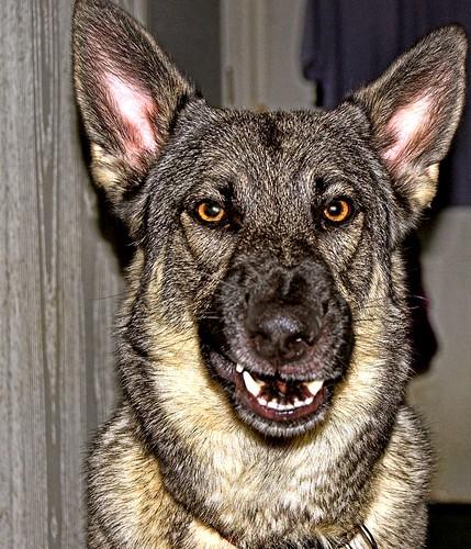 Mean Dog