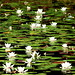 Acqua Flowers by pedrosimoes7