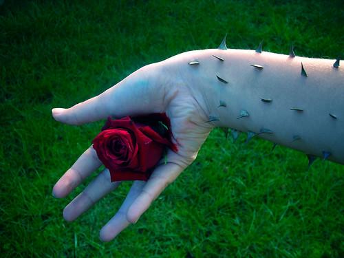 La semilla muere...al germinar