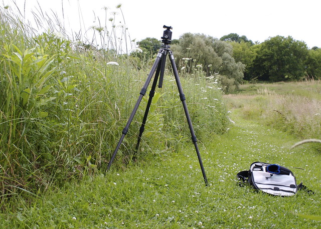 Tripod in meadow