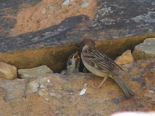 Bird feeding - 23/07/2006