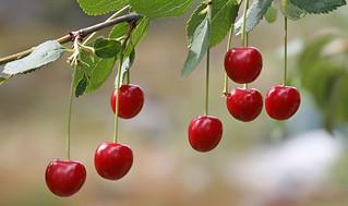 Missing Cherry II
