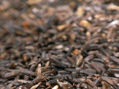 sunflower seed, brown, produce, close-up,