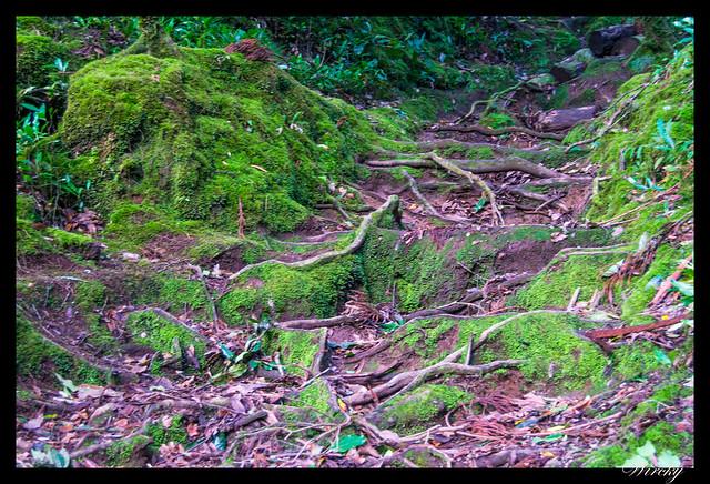Escalones de ramas en el lago do Congro