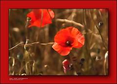 Flowers - Flores -  Fiori - Fleurs - 花盛り -  花卉 - цветы