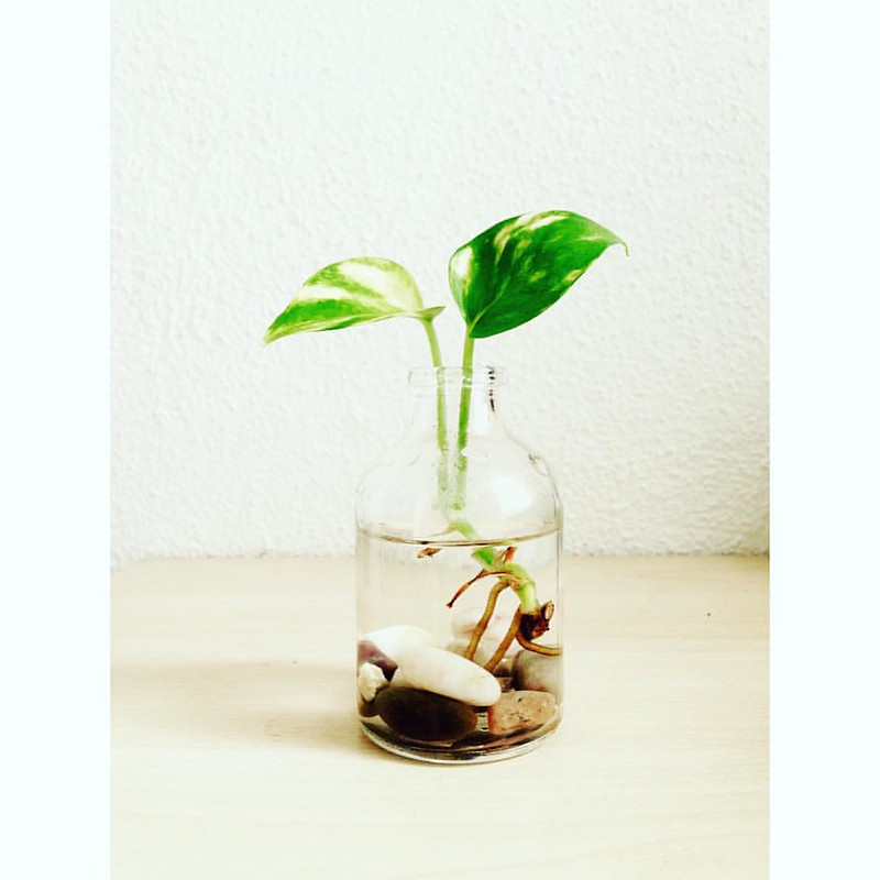 Eco Eco