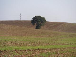 Fieldscape (III)