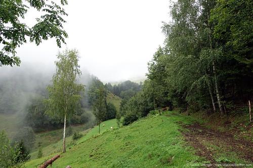 Almwanderung in Kärnten