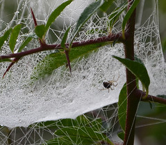 Spiders' webs on an autumn morning
