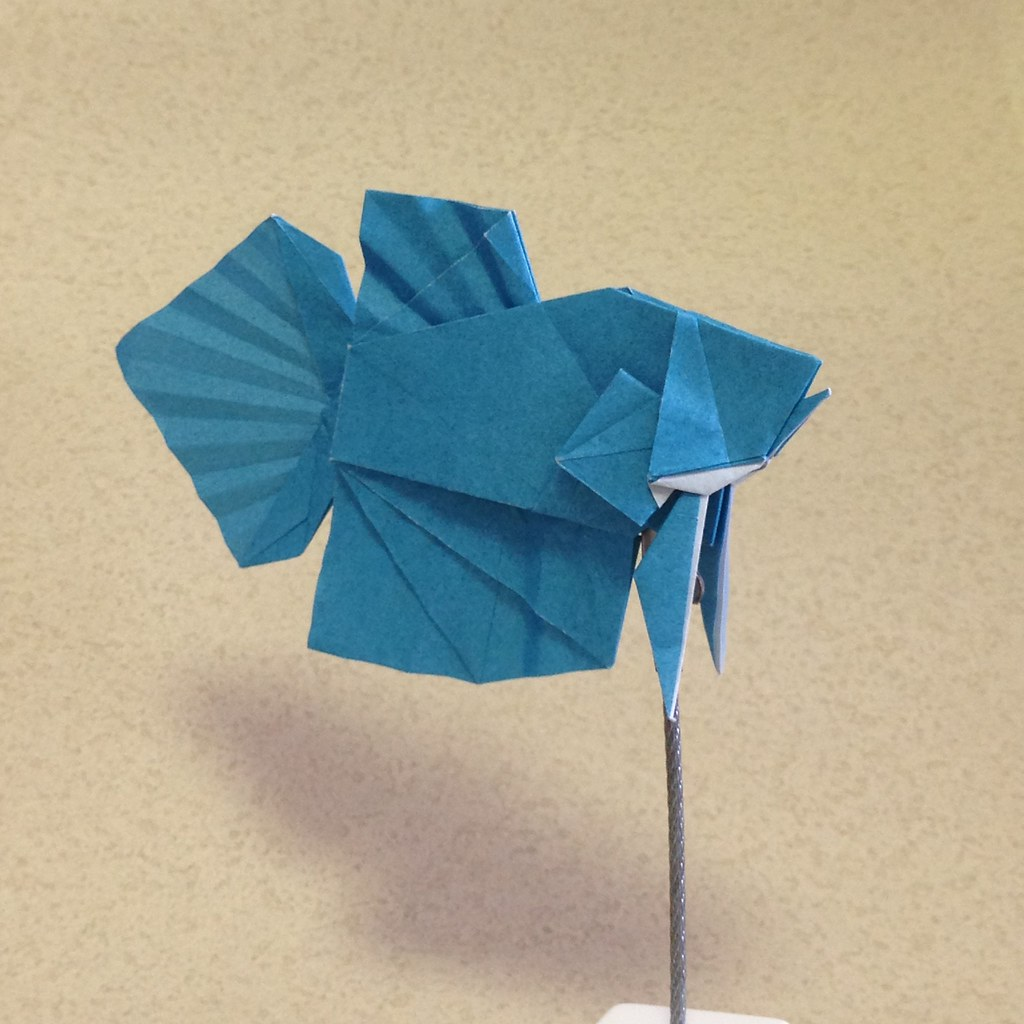 Origami betta fish instructions 1557721 114searchfo origami betta fish all about origamisiamese fighting fish robert j lang gilads origami pagehow to make an origami fish youtubeorigami traditional fish jeuxipadfo Images