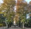 Sabahınız xeyir, dostlar :) #XanBağı #payız #KhanBaghi #autumn #colouredleaves #park #Ganja #Azerbaijan #az #aztagram #nofilter