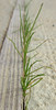 Grass growing in the sidewalk crack