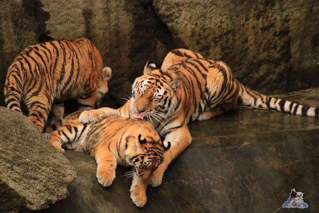 Tierpark Berlin 29.11.2015   111