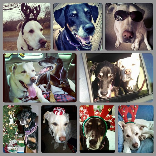 Missing My Babies at Christmas Dog Angels - Lapdog Creations