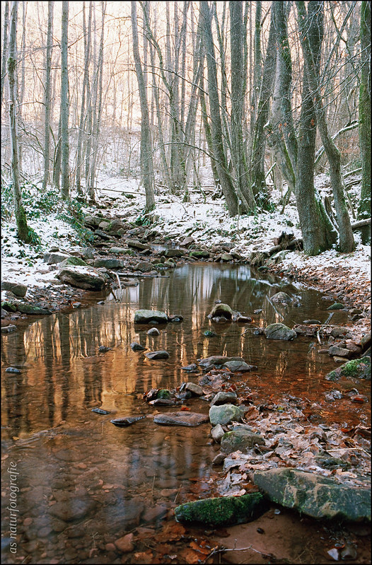 Koppenbach im Winter