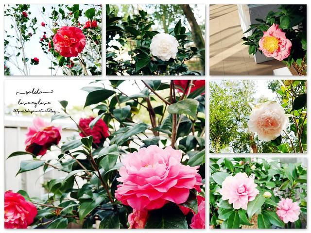 陽明山一日遊免門票景點花卉試驗中心 (41)