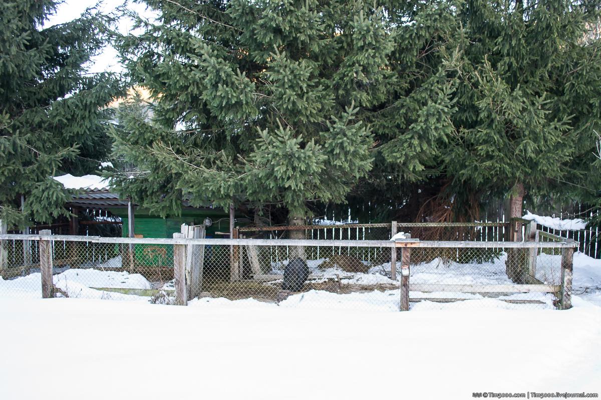 Мысливка и отель Медведь зимой