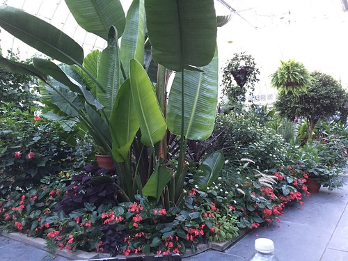 Westmount Public Library greenhouse