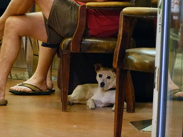 petit chien sage