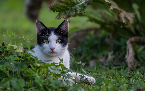 cats animals cat croatia catsdogs podravina hrvatska nikkor8020028 nikond600 canceledgroup