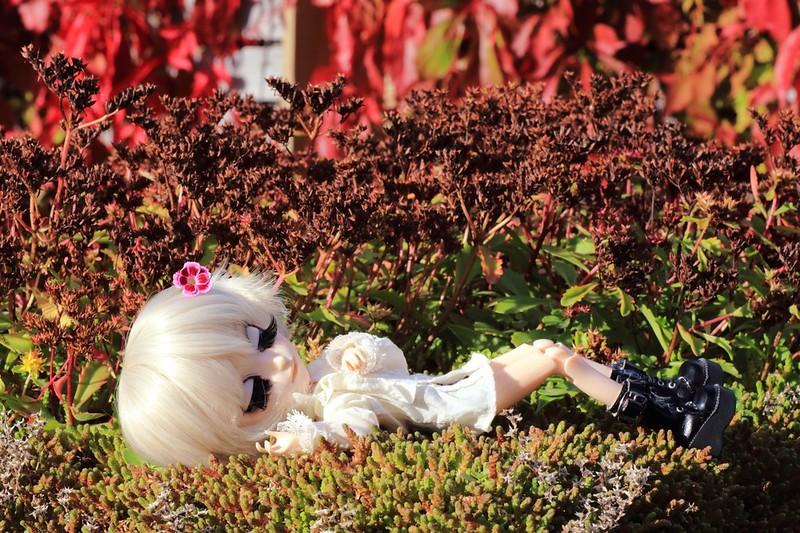 Autumn sleep