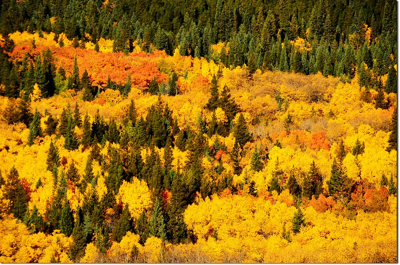 Fall colors by Peak to Peak HWY, Colorado  (5)