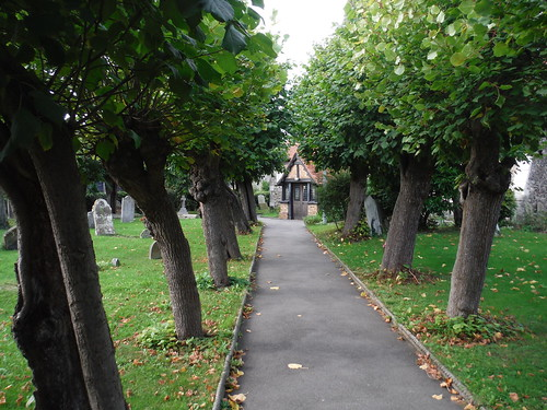 Polled Lime Trees in churchyard, Horndon-on-the-Hill