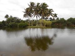 Trees By Pandanus Lake