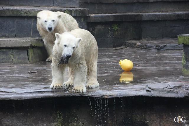 Besuch Zoo Rostock 17.10.201518