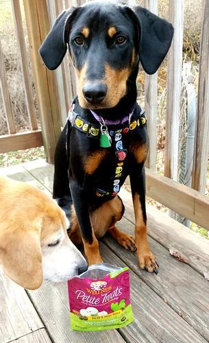 Wellness Dog Treats Lapdog Creations