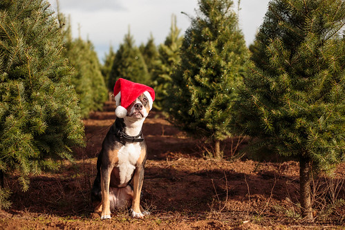 2015 Christmas-7787