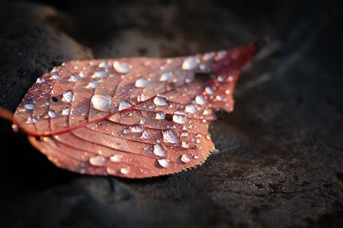 Macro leaf.