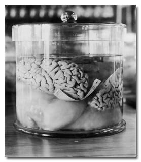 мифы о мозге
