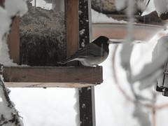 Snowbird 1 - Snowpocalypse 2017_22