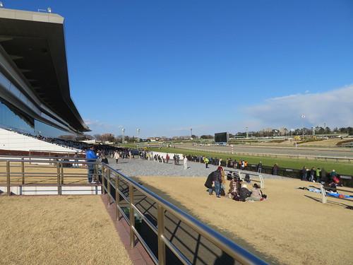 中山競馬場の芝スタンドからコースを見下ろす