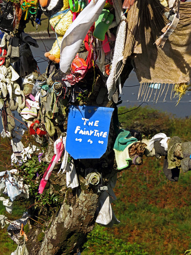 We found a 'Fairy Tree' on Killary Harbour Drive in Ireland