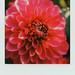 Big & Beautiful by Joep Polaroid Photography