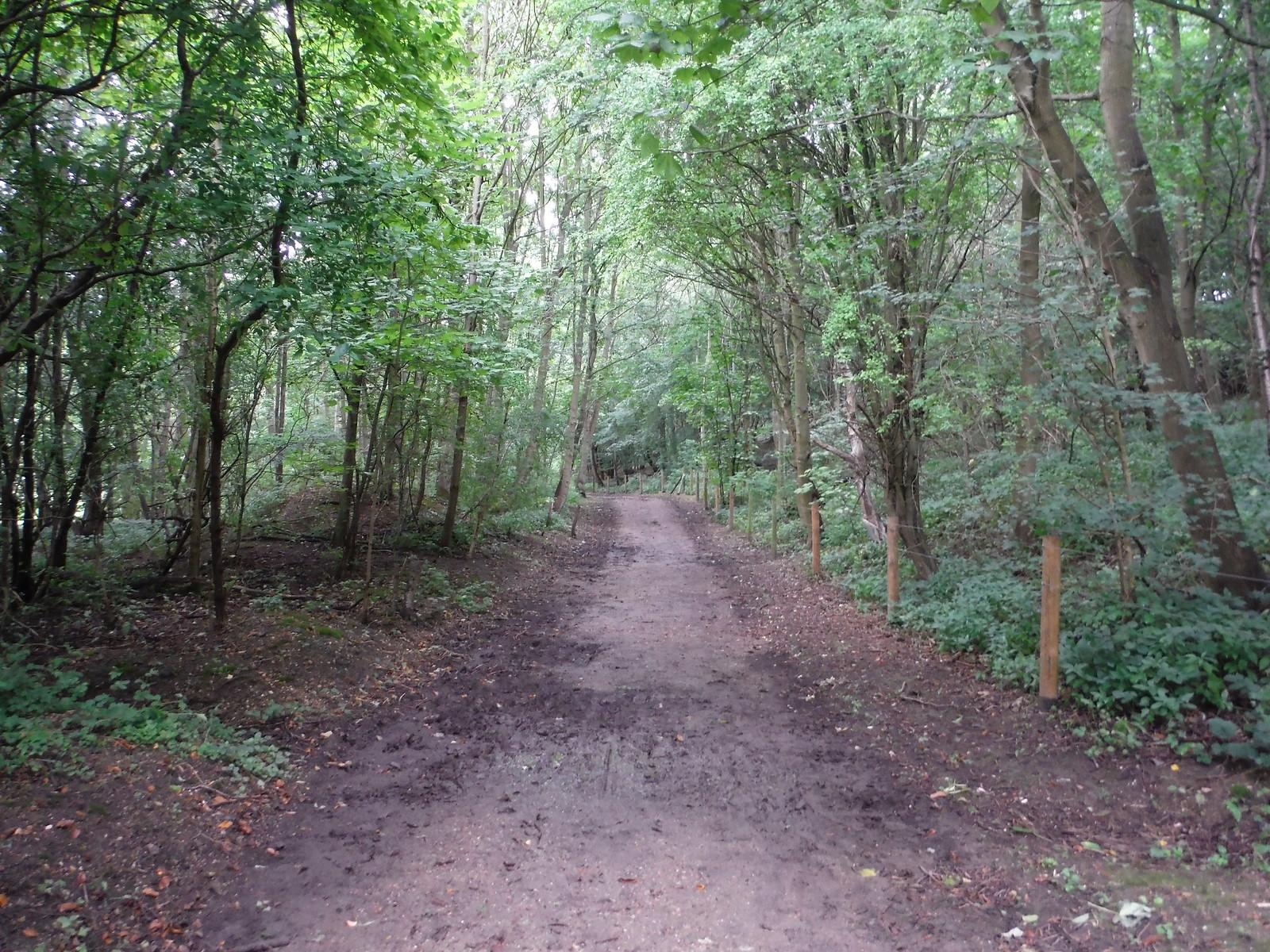 Through Mill Wood SWC Walk 164 Roydon to Sawbridgeworth via Henry Moore Foundation