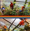 Tropical rain-forest biome, Biodome de Montreal by lezumbalaberenjena