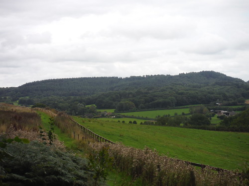 High Wood, from Castle Ditches